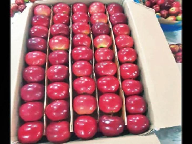 शिमला की फल मंडी में सेब की अर्ली वैरायटी टाइडमैन ने दस्तक दे दी है। - Dainik Bhaskar