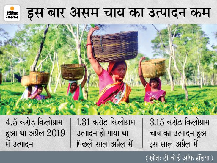 पिछले साल की तुलना में चाय 25% महंगी, अगले महीने से मिलेगी राहत|बिजनेस,Business - Dainik Bhaskar