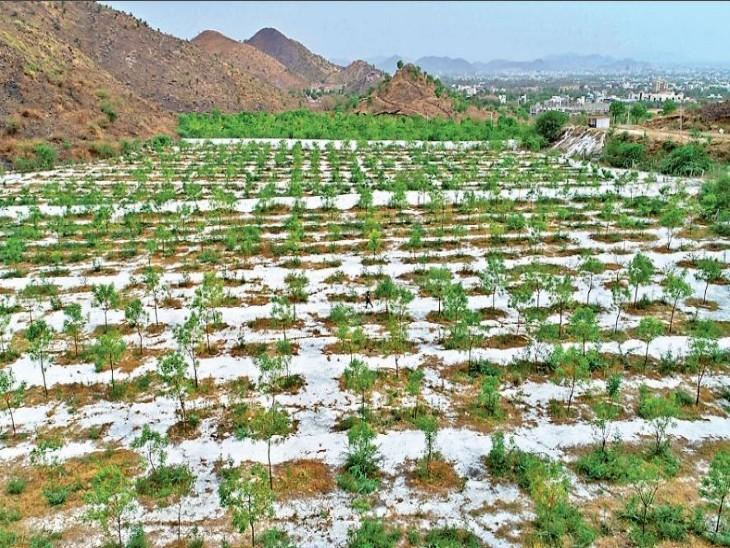 6 राज्यों ने 7,605 कराेड़ रुपए खर्च कर 136 करोड़ पौधे लगाए पर हरियाली महाराष्ट्र, छत्तीसगढ़, बिहार और झारखंड में ही बढ़ी|देश,National - Dainik Bhaskar