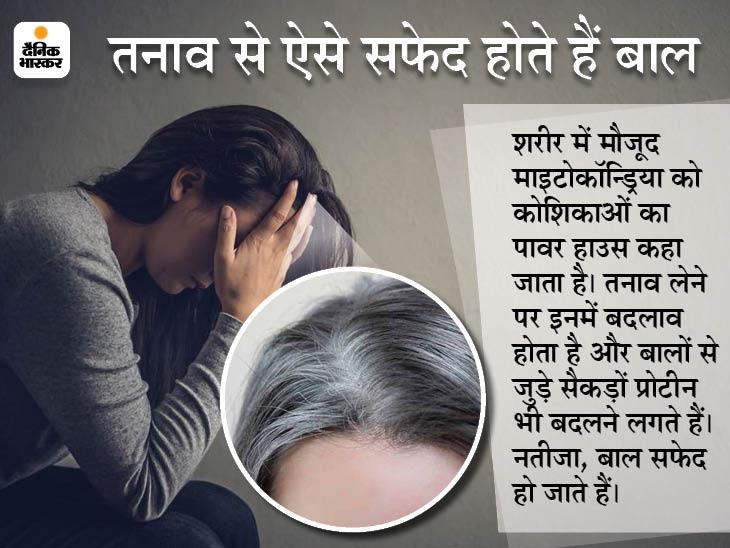 बालों के सफेद होने की एक वजह तनाव भी, स्ट्रेस कम करते हैं तो बालों का पुराना रंग वापस लौट सकता है; अमेरिकी वैज्ञानिकों का दावा|लाइफ & साइंस,Happy Life - Dainik Bhaskar