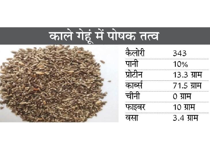 काले गेहूं-चावल के शौकीन बढ़े, किसानों ने शुरू की ऑनलाइन बिक्री पर वैज्ञानिकों के पास रिसर्च नहीं|ग्वालियर,Gwalior - Dainik Bhaskar