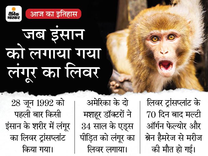 जब एक इंसान लंगूर के लिवर से 70 दिन तक जिंदा रहा, 29 साल पहले पहली बार हुआ था ये अनोखा लिवर ट्रांसप्लांट देश,National - Dainik Bhaskar