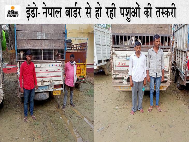 नेपाल वाया चीन भेजा जा रहा जानवरों का मांस, छुट्टा पशु चुराकर विदेशों में सप्लाई कर रहे पशु तस्कर गोरखपुर,Gorakhpur - Dainik Bhaskar