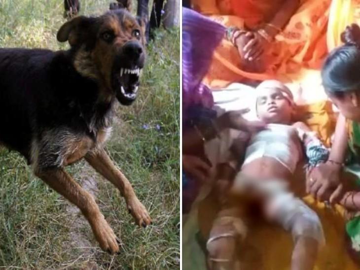 5 साल का बच्चा खेत में काम कर रहे पिता के पास जा रहा था, इसी दौरान कुत्तों के झुंड ने हमला कर दिया; लखनऊ के ट्रॉमा सेंटर में दम तोड़ा लखनऊ,Lucknow - Dainik Bhaskar