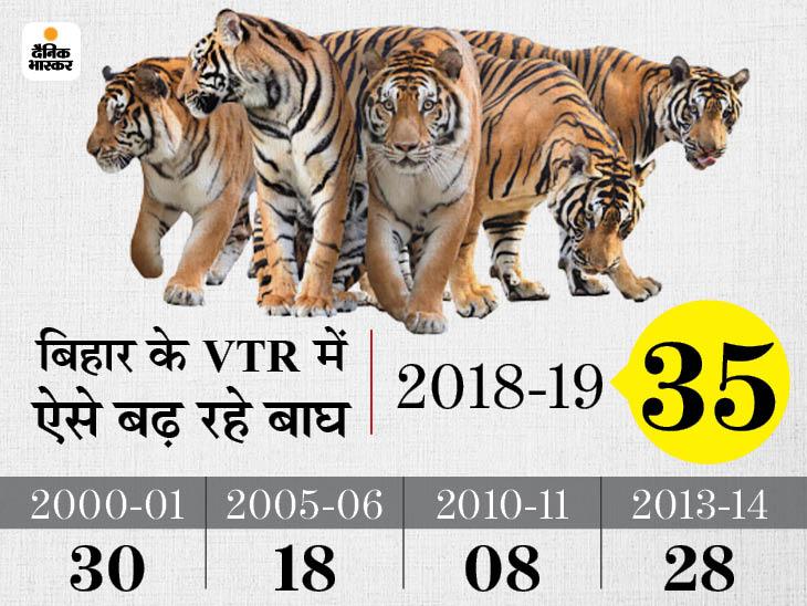 15 अक्टूबर के बाद खुल सकता है VTR, अब 40 तक हुए बाघ; 2018 के सर्वे में PMO ने Very Good कहा था, इस बार कोरोना की वजह से नहीं आई टीम|बिहार,Bihar - Dainik Bhaskar