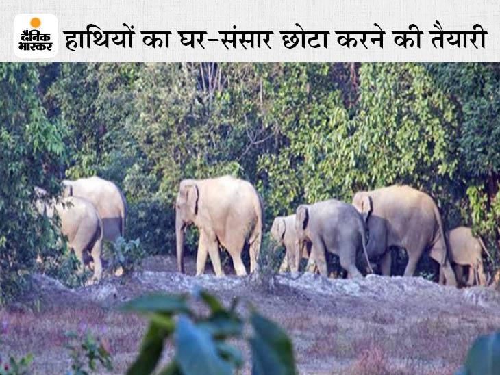 सरगुजा क्षेत्र के विधायकों से प्रस्ताव लेकर हाथी रिजर्व को 1995 की जगह 450 वर्ग किमी में सीमित करने की तैयारी, मंत्रिपरिषद में आएगा प्रस्ताव|रायपुर,Raipur - Dainik Bhaskar