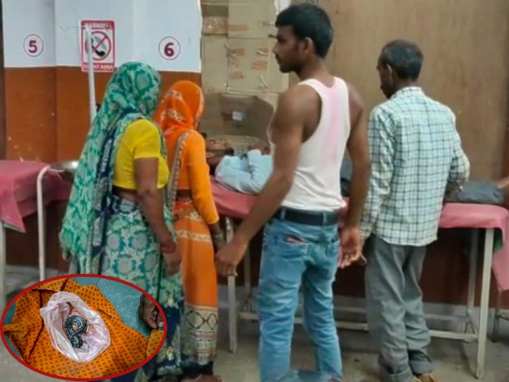 घर की छत पर सो रहे युवक को सांप ने डसा; परिजनों ने पीट पीटकर पहले सांप को मार डाला, फिर लेकर पहुंच गए अस्पताल|आगरा,Agra - Dainik Bhaskar