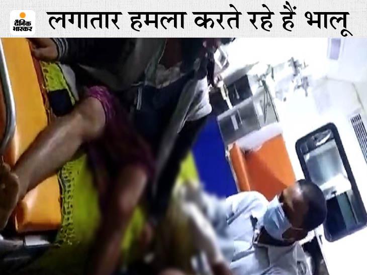 मजदूरी करके वापस लौट रहे ग्रामीण पर मादा भालू और उसके बच्चे ने किया हमला, अस्पताल में इलाज जारी; 11 दिन के अंदर तीसरी घटना छत्तीसगढ़,Chhattisgarh - Dainik Bhaskar