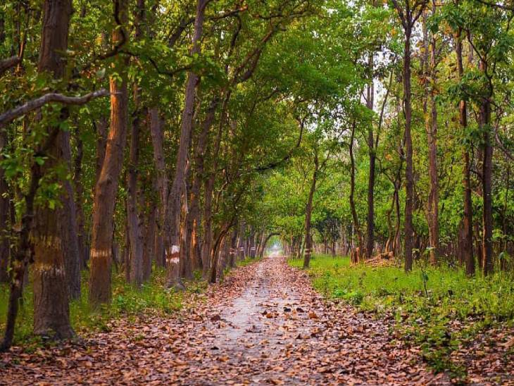 9 जून 2014 को पीलीभीत के जंगलों को टाइगर रिजर्व का दर्जा मिला था, जिसके बाद पर्यटन को बढ़ावा देने के लिए एक के बाद एक सफल प्रयास किए जा रहे हैं।