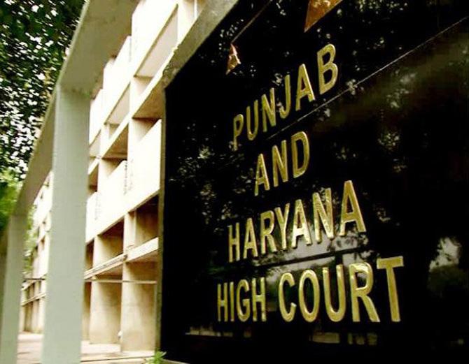 पति को छोड़कर लिव इन में रह रही महिला ने मांगी सुरक्षा, हाईकोर्ट ने SSP को दिए निर्देश; याची को भी दी नसीहत|पंजाब,Punjab - Dainik Bhaskar
