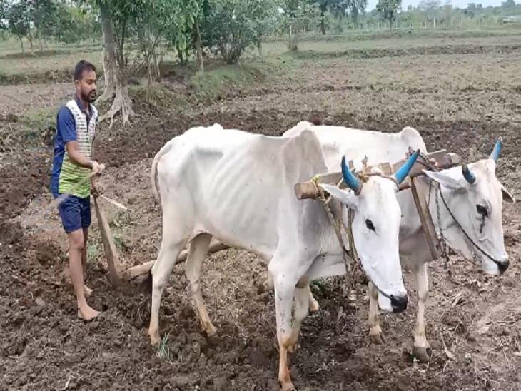 100 रुपए रोजी के लिए दूसरे के खेतों में मजदूरी कर रहे शिक्षक, सरकारी नौकरी के लिए हो चुका है सिलेक्शन मगर नहीं मिल रही नियुक्ति|रायपुर,Raipur - Dainik Bhaskar