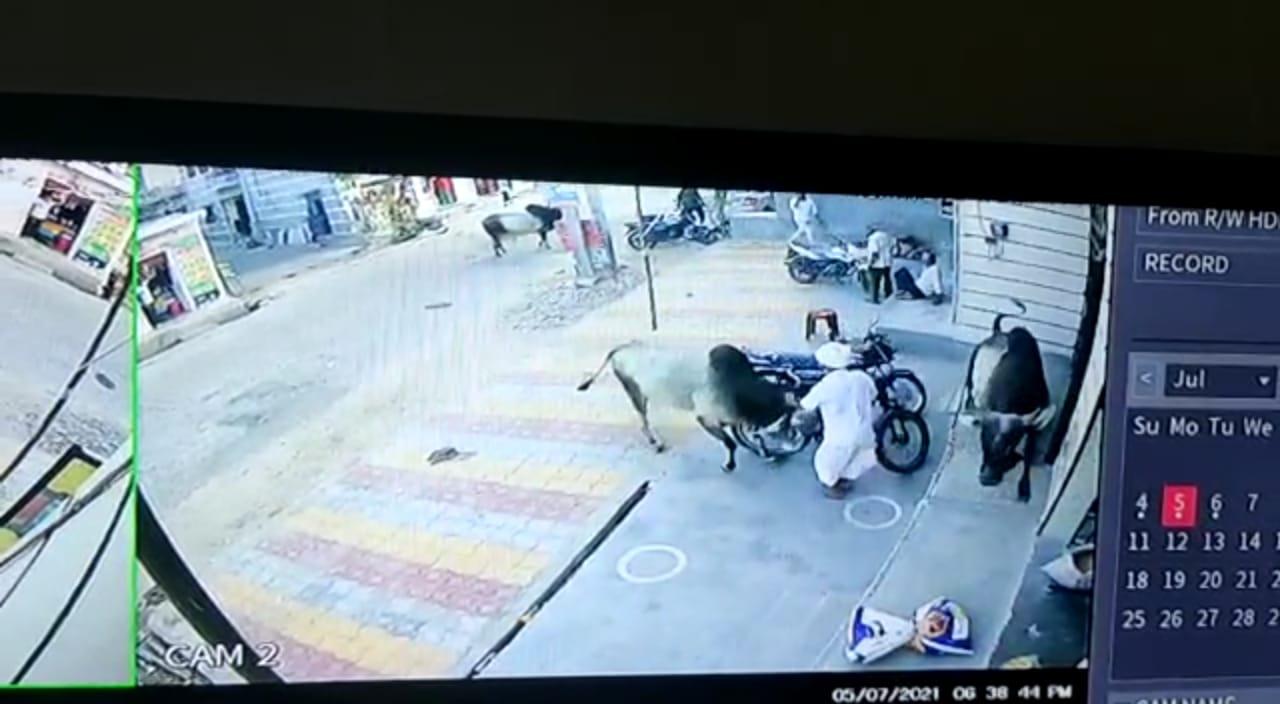 अपने घर के बाहर खड़े थे 75 साल के बुजुर्ग, सांड़ों ने ले लिया चपेट में, अचेत होकर सड़क पर गिरे; इलाज के दौरान तोड़ा दम|जोधपुर,Jodhpur - Dainik Bhaskar