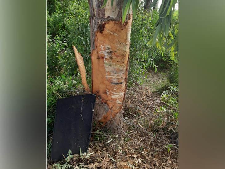कार की टक्कर के बाद पेड़ में हुआ गड्ढा।