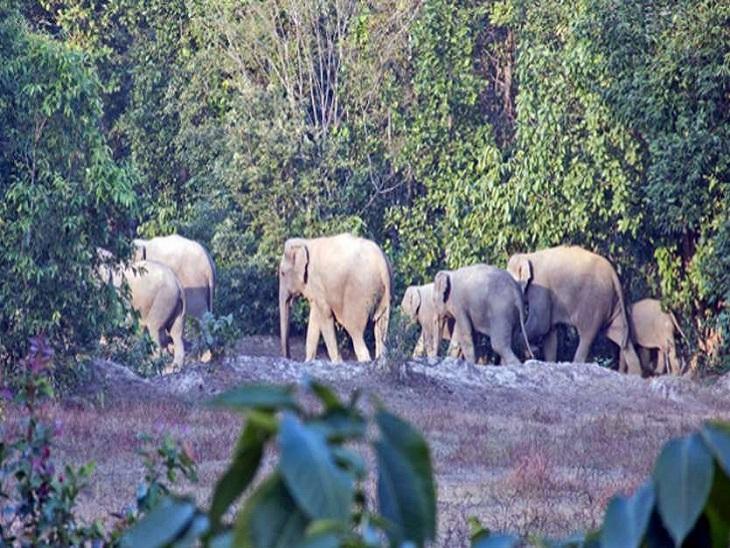 लेमरु हाथी रिजर्व जिस क्षेत्र में प्रस्तावित है वह हाथियों के सबसे पुराने रहवासों में शुमार है।