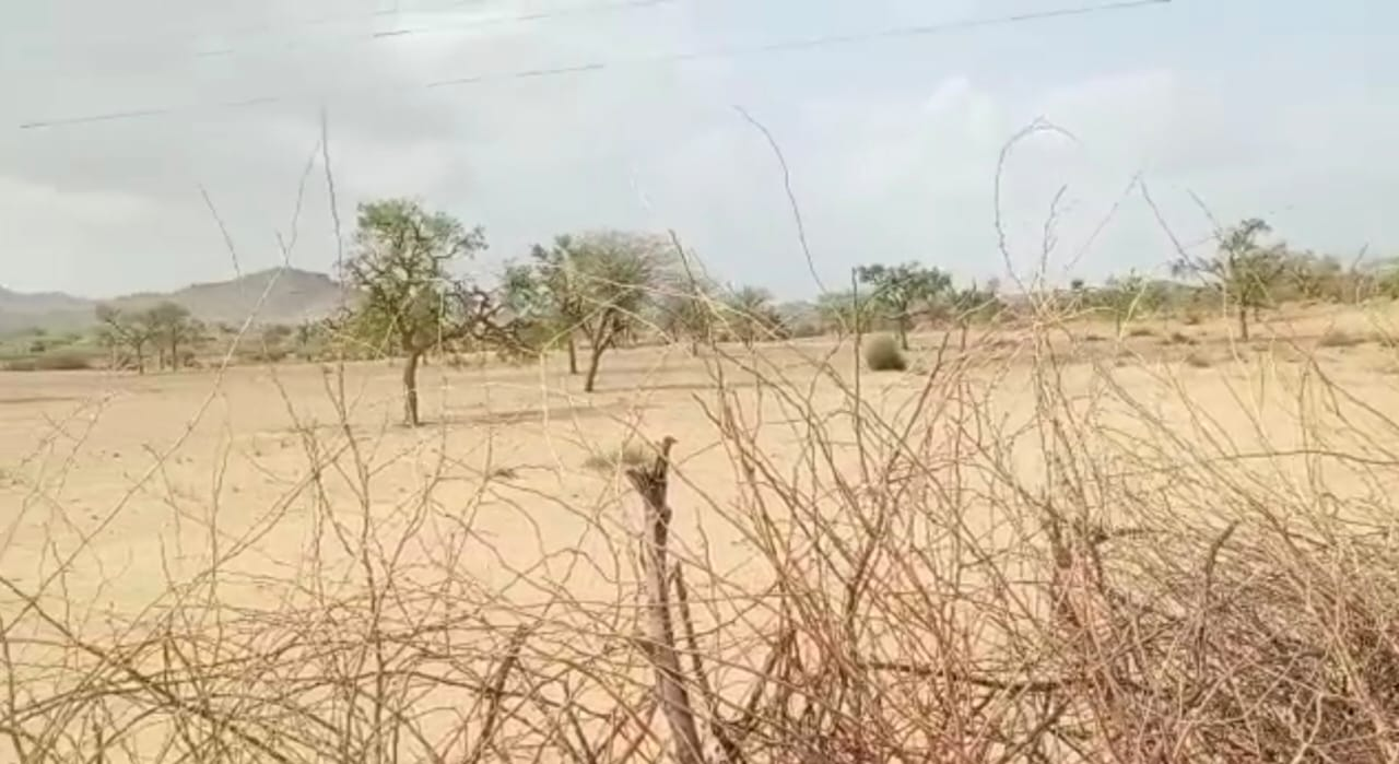 किसान ने खेतों को साफ कर चारों तरफ बना दी बाड़, अब इंतजार बारिश का।
