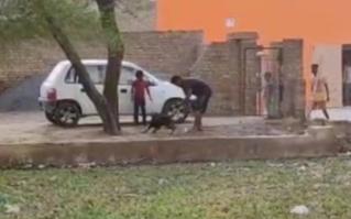 युवक ने की थी कुत्ते की निर्ममता से पिटाई, पुलिस ने की एफआईआर दर्ज, आरोपी फरार, चूनावढ़ पुलिस ने शुरू की जांच|श्रीगंंगानगर,Sriganganagar - Dainik Bhaskar
