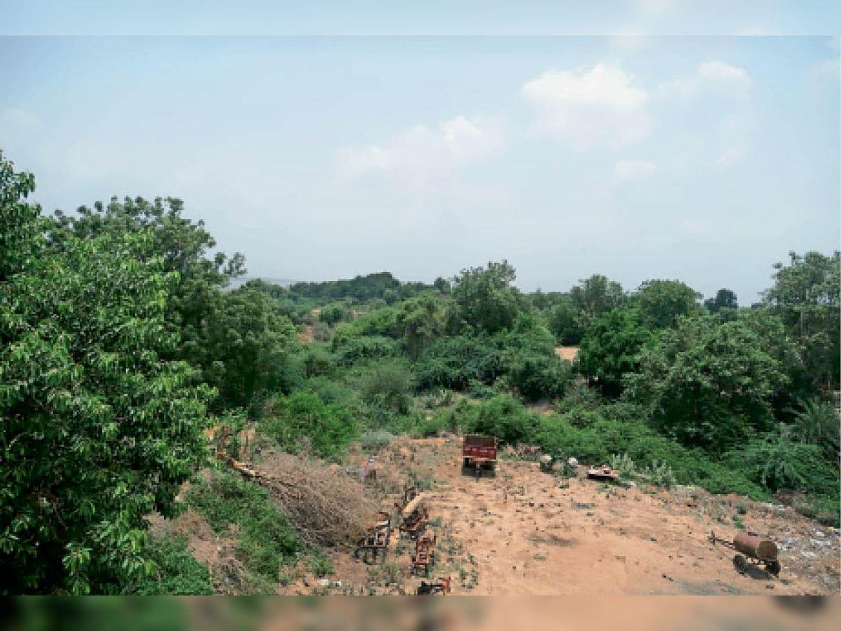 वह जंगल जहां लगाया गया है पिंजरा। - Dainik Bhaskar