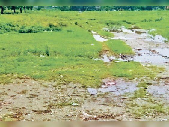 शहर से सटे टेउसा पंचायत के महेशबथना पंचायत में नप द्वारा खरीदी गई जमीन। - Dainik Bhaskar