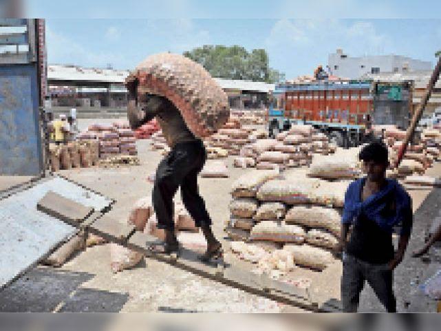 नीलामी में खरीदा हुआ प्याज को सप्लाई करने के लिए ट्रकों में भरते मजदूर। - Dainik Bhaskar