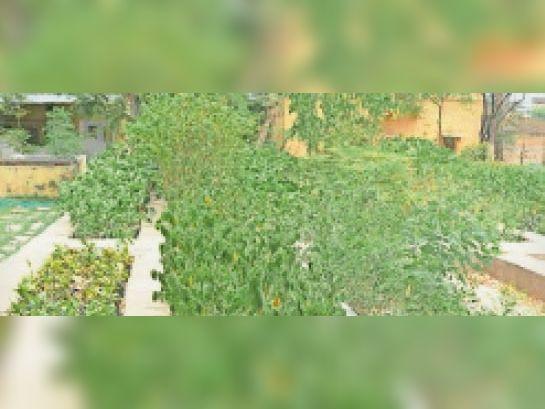 बारां. मानसून सीजन के लिए वन विभाग की ओर से नर्सरी में तैयार किए गए पौधे। - Dainik Bhaskar