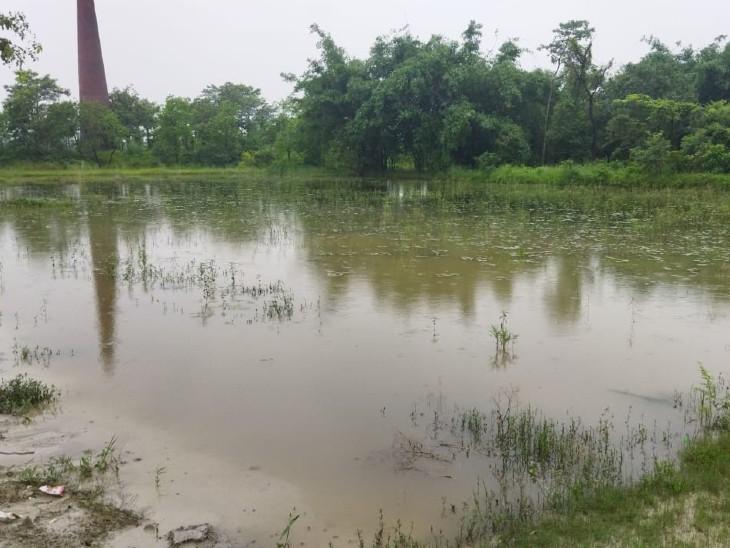 बारिश से धान की फसल हो रही खराब। - Dainik Bhaskar