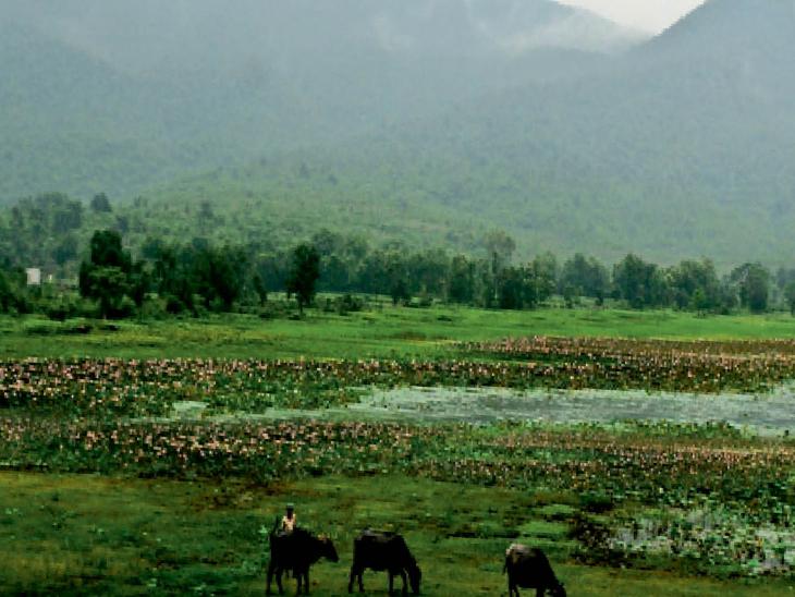 बारिश के बीच डिमना लेक का दृश्य। - Dainik Bhaskar