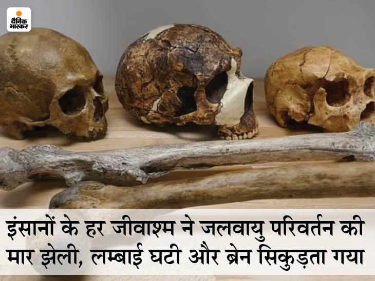 जलवायु परिवर्तन के कारण इंसानों की लम्बाई घट सकती है और दिमाग सिकुड़ सकता है, इंसानों के 300 जीवाश्मों की जांच में हुआ खुलासा लाइफ & साइंस,Happy Life - Dainik Bhaskar