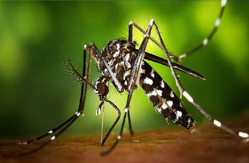 कोरोना गया नहीं, केरल में जीका वायरस का पहला मामला मिला; केरल की स्वास्थ्य मंत्री ने दी जानकारी|देश,National - Dainik Bhaskar