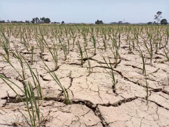 मॉनसून की ऐसी गलत घोषणाओं से मौसम विभाग का मौन रहना ही बेहतर|चंडीगढ़,Chandigarh - Dainik Bhaskar