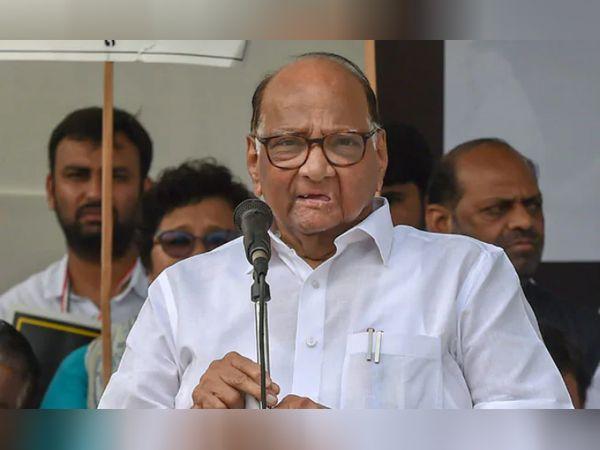 शरद पवार ने कहा-अगला विधानसभा अध्यक्ष भी कांग्रेस पार्टी से ही होगा, वे जिसे चुनेंगे वह हमें मंजूर होगा|महाराष्ट्र,Maharashtra - Dainik Bhaskar