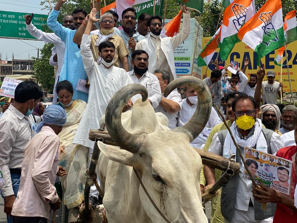 कांग्रेसियों ने पेट्रोल-डीजल की बढ़ती कीमतों के खिलाफ बैलगाड़ी, तांगा पर चढ़कर किया प्रदार्शन|बरेली,Bareilly - Dainik Bhaskar