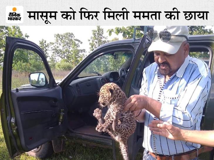 जंगली जानवर घात लगाए थे, ग्रामीण ने 1 माह के शावक को थैले में रखकर अफसरों को दिया; वन विभाग ने रेस्क्यू कर मां के पास पहुंचाया, देखें VIDEO|छिंदवाड़ा,Chhindwara - Dainik Bhaskar
