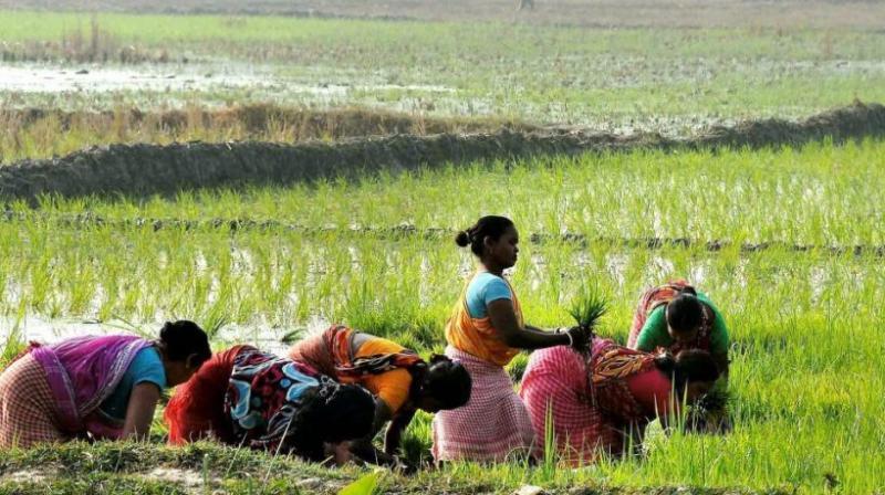 दो हफ्ते बारिश नहीं हुई तो किसान झेल सकता है दो से तीन हजार रुपये प्रति हेक्टेयर का नुकसान, डीजल के बढ़ते दामों के बाद भी करनी होगी सिंचाई बरेली,Bareilly - Dainik Bhaskar