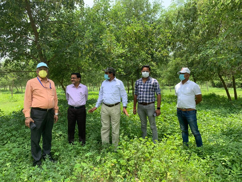 पौधों का निरीक्षण करते सीपीसीबी, लखनऊ के डायरेक्टर। साथ में वन विभाग, नगर निगम और परिवहन विभाग के अधिकारी।