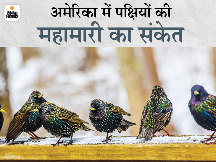 पक्षियों की आंखों की रोशनी छीन रही रहस्यमय बीमारी, दिशा भूलने और थकान के कारण उड़ भी नहीं पा रहे|लाइफ & साइंस,Happy Life - Dainik Bhaskar