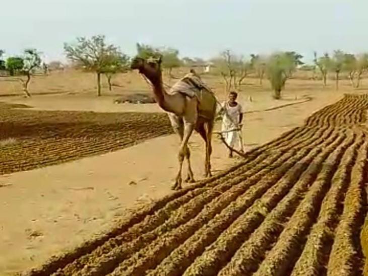 बारिश से किसानों के चेहरे खिलें, खेतों में शुरू की बुवाई, मौसम विभाग ने जारी किया येलो अलर्ट|बाड़मेर,Barmer - Dainik Bhaskar