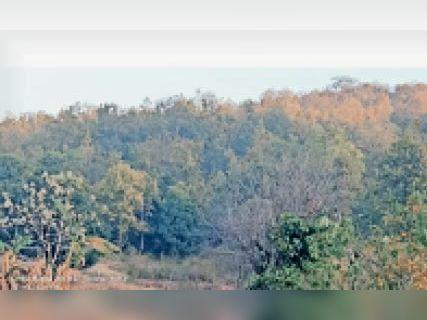 केरागानी जंगल में सुरक्षा बलों को रास्ता दिखाते आगे बढ़ रहे बारडीह के रामदेव का आईईडी पर पैर पड़ते ही विस्फोट, मौत गुमला,Gumla - Dainik Bhaskar