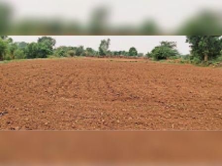 मासलपुर। प्रकृति का चक्र बिगड़ने से फसल बुवाई के बाद खेतों में सूरज की तपन से झुलस रही हैं फसलें। - Dainik Bhaskar
