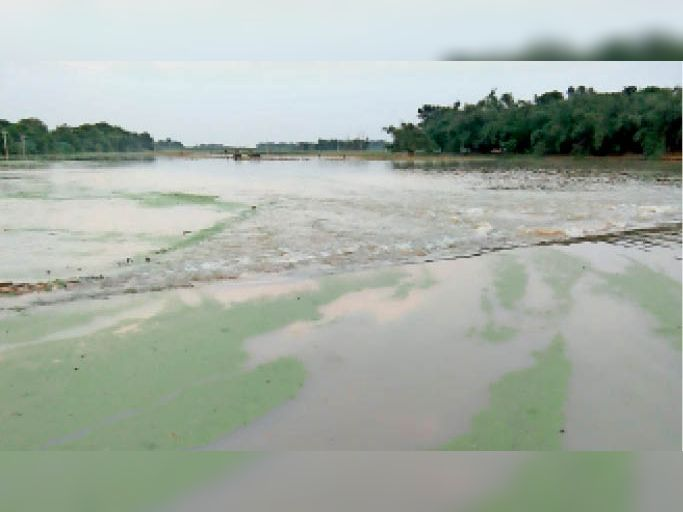 हसनपुर के सिरसिया गांव के खेतों में फैला बाढ़ का पानी। - Dainik Bhaskar