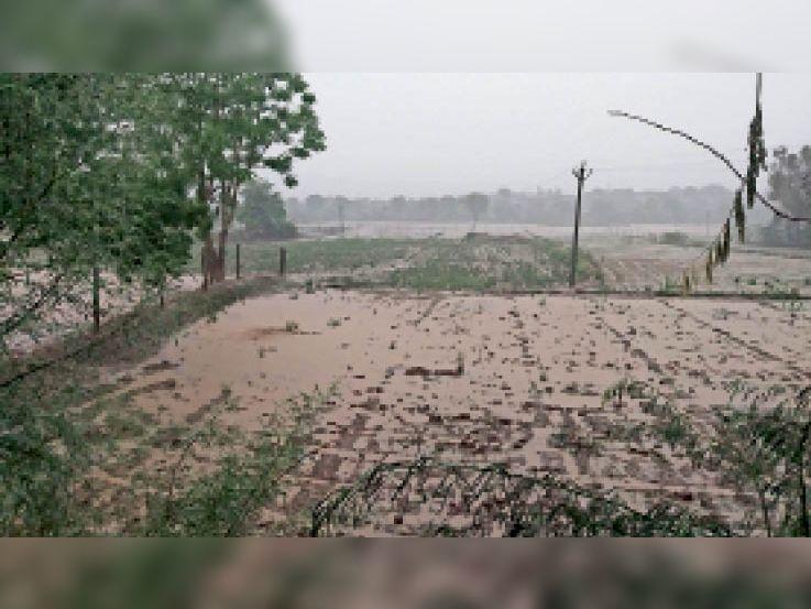 खिरनी| खिरनी में मूसलाधार बरसात के बाद खेतों में भरा पानी| - Dainik Bhaskar