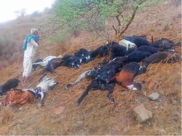 जंगल में घास चर रहे थे बकरे, तभी हुआ हादसा। मालिक की जान बाल-बाल बची। - Dainik Bhaskar