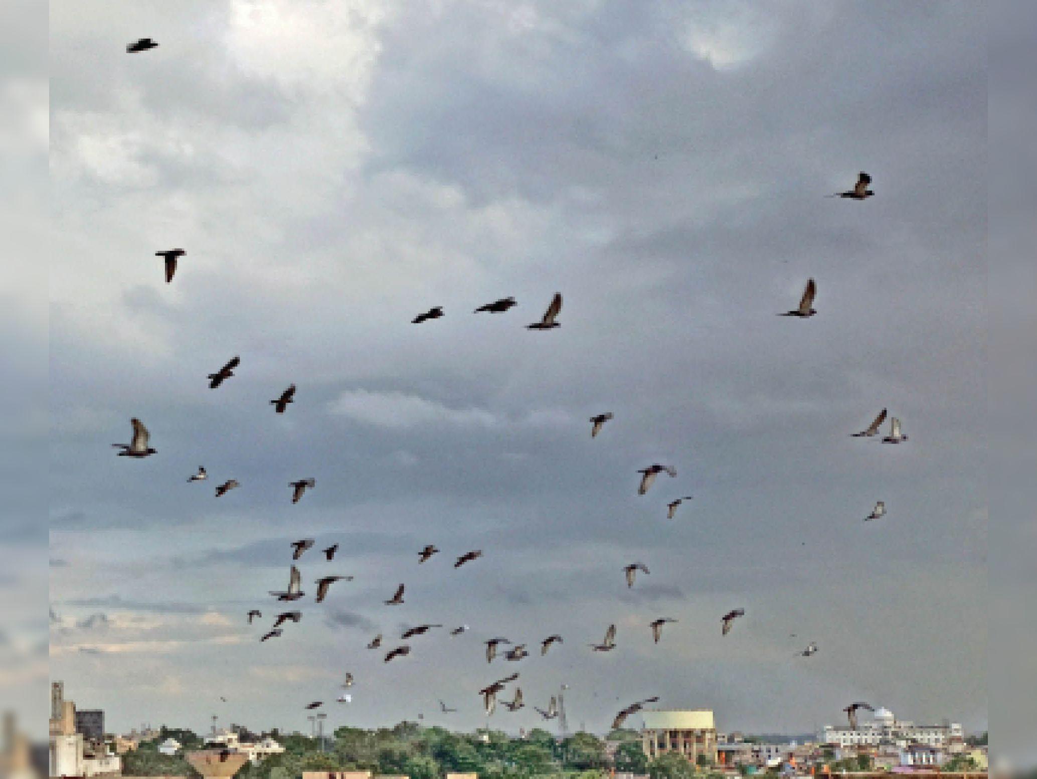 गरजने पर छत न मिले तो खड़े न रहें, उकड़ू बैठें, बारिश से पहले तेज गर्जना से पक्षी भी सहमे, देर तक उड़ते रहे|रायपुर,Raipur - Dainik Bhaskar