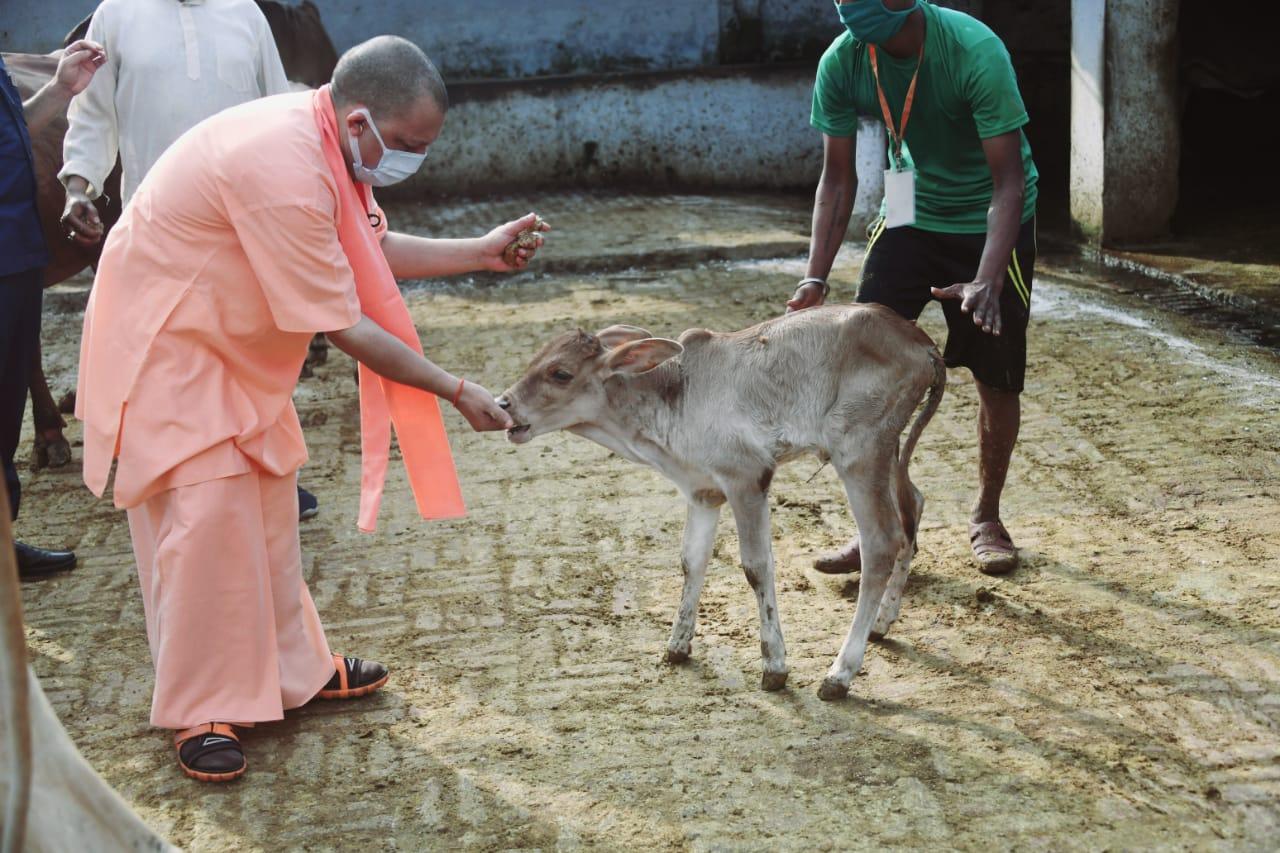मुख्यमंत्री हमेशा की तरह गोशाला गए और करीब आधा घंटा गायों के बीच गुजारा।