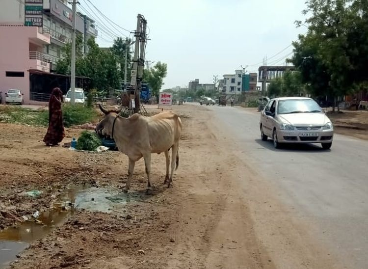 नया गांव रोड पर सड़क किनारे चारा बेचती एक महिला।