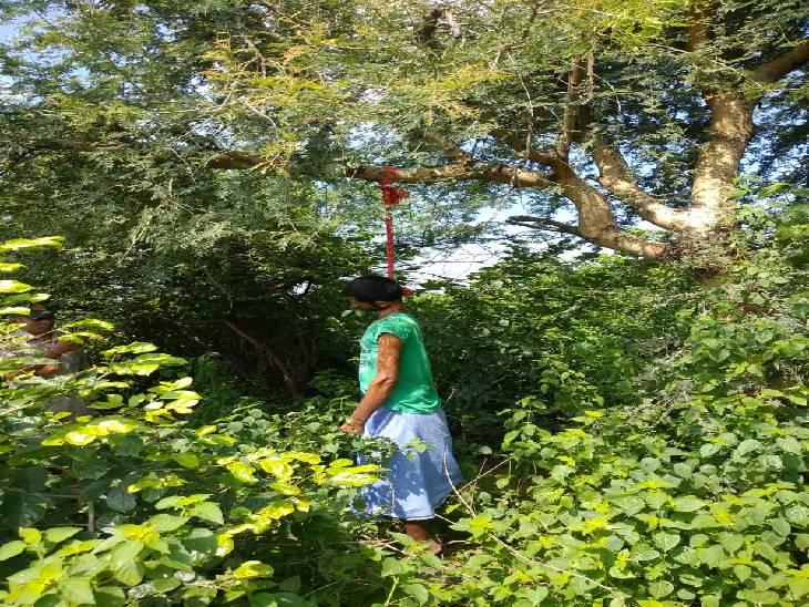 मिर्जापुर में बीमारी से तंग आकर बहन के घर गए युवक ने पेड़ से फांसी लगाकर की आत्महत्या। - Dainik Bhaskar