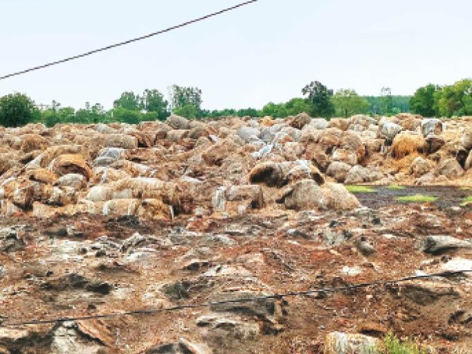 नारायणगढ़ | किसानाें से ली पराली खुले में पड़ी, जो अब खराब हो रही है। - Dainik Bhaskar