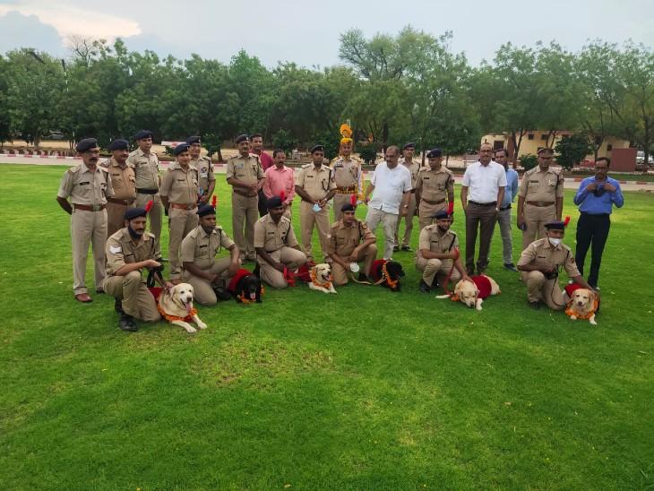 जयपुर एयरपोर्ट सुरक्षा फोर्स में तैनात 6 डॉग हुए रिटायर्ड, 11 हजार रुपए सैलेरी पर करते थे काम; रथ में सवार कर दी विदाई|राजस्थान,Rajasthan - Dainik Bhaskar