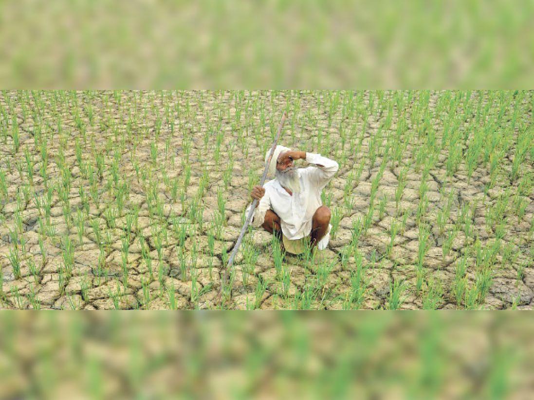 बूंदी. किसानों ने अच्छी फसल की आस में धान तो बो दिए, लेकिन बारिश नहीं होने से खेतों में दरारें पड़ने लगी हैं। अब उनके सामने इन बोए पौधों को बचाने की चुनौती है। - Dainik Bhaskar