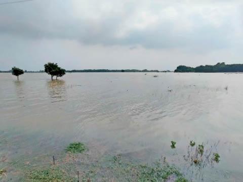 परमानंदपुर गांव में बारिश के पानी में डूबे खेत। - Dainik Bhaskar