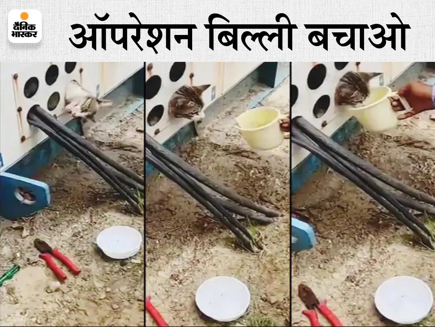 जेनरेटर में फंस गई थी बिल्ली, निकालने के लिए वन विभाग से लेकर NDRF तक से मदद मांगी गई; VIDEO देखें|गाजियाबाद,Ghaziabad - Dainik Bhaskar